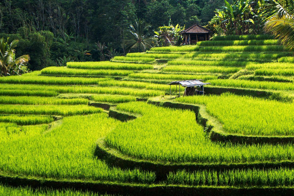 Image L'essentiel des beautés Balinaises et escapade vers Nusa Lembongan