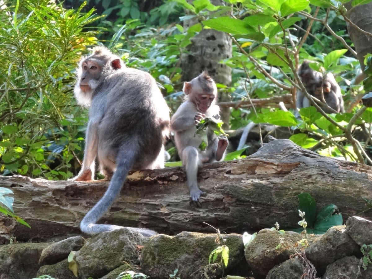 Image Voyage en ligne : Découvrir Bali en express
