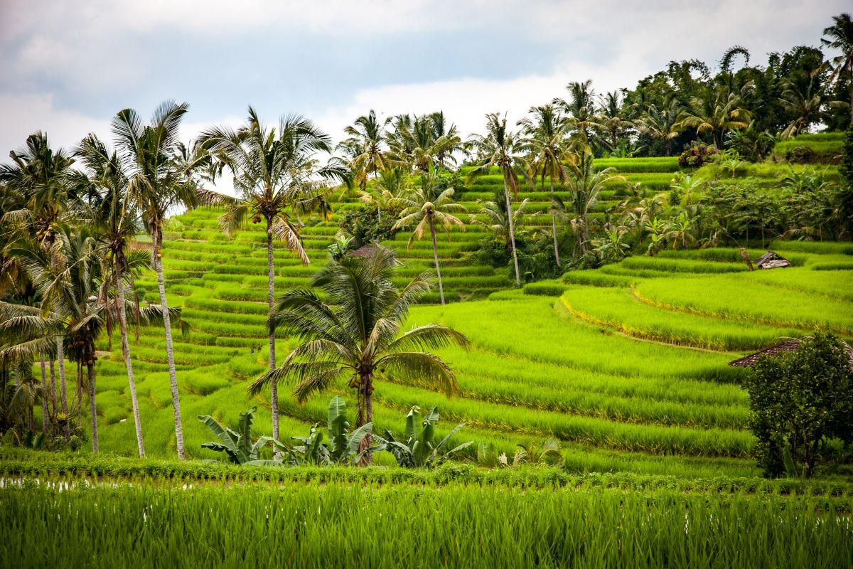 Image 35 dates de départs regroupés: L'île des Dieux entre mer, rizières, fôret tropicale et volcans.
